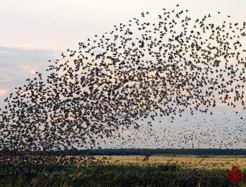 پرندگان (1)