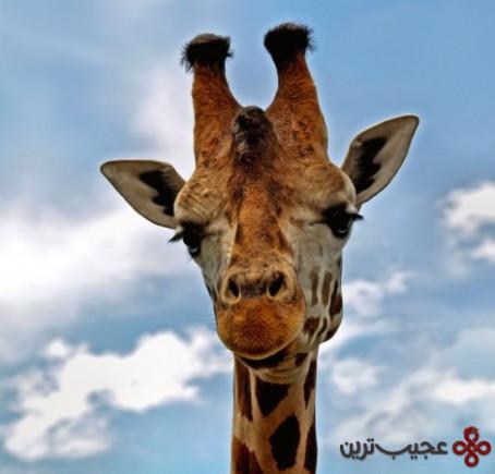پنج منطقه سیاحتی بزرگ آفریقا