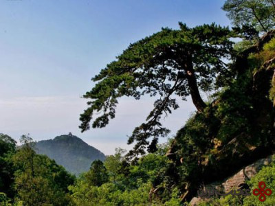 کوه تای (1)