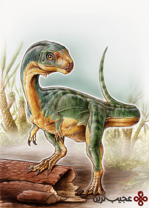 herbivore-theropod