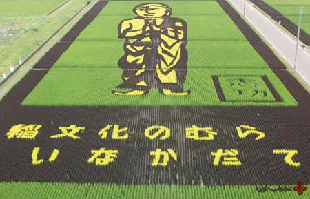 کشتزار - برنج