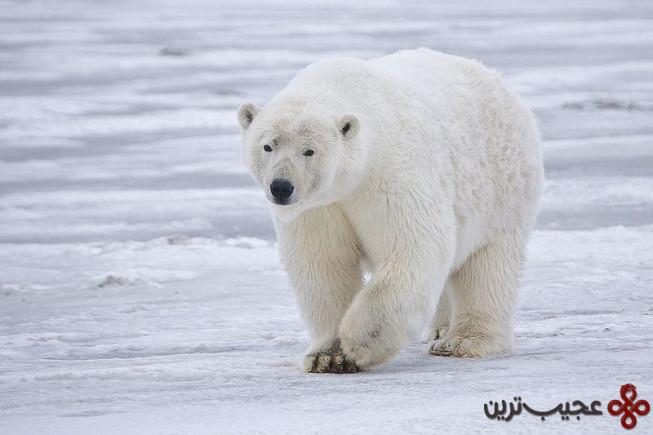 خرص قطبی