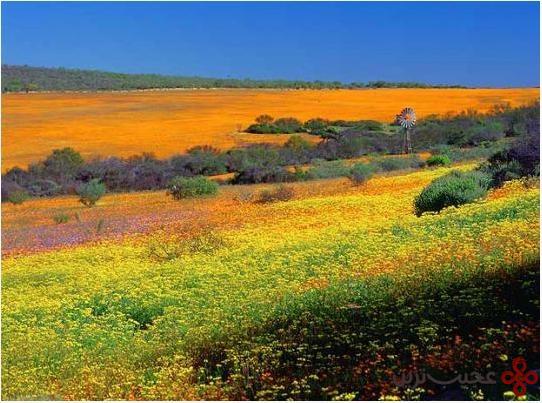صحرای غرق در گل