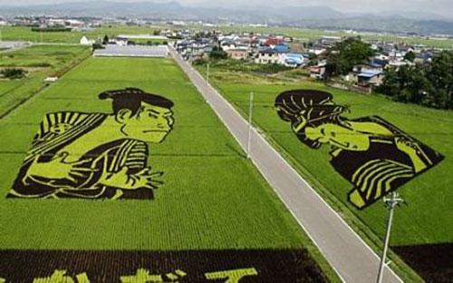 عکس کاور برنج (10)