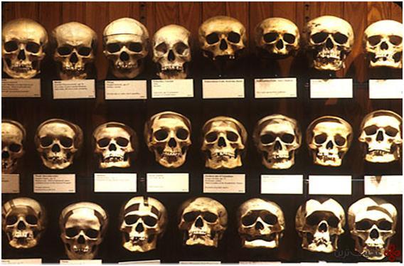 موزه موتر تاریخ پزشکی