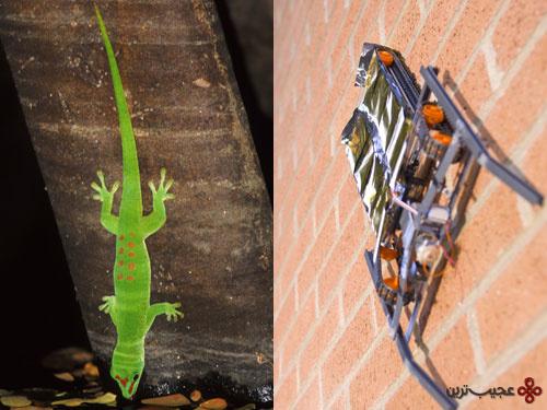 04.spidergecko