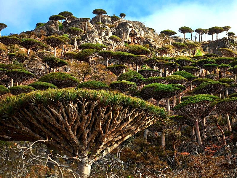 cover Socotra
