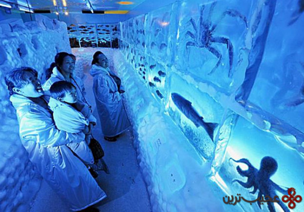 ice aquarium in kesennuma (2)