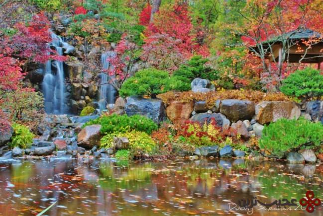 باغ ژاپنی اندرسون ۲