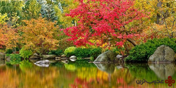 باغ ژاپنی اندرسون