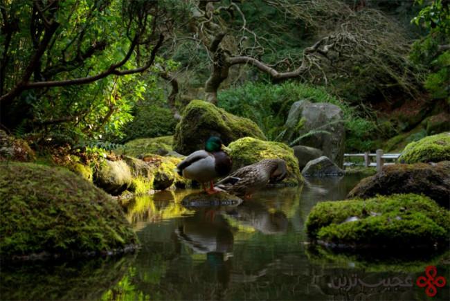 باغ ژاپنی پرتلند ۱