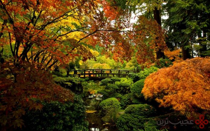 باغ ژاپنی پرتلند ۳