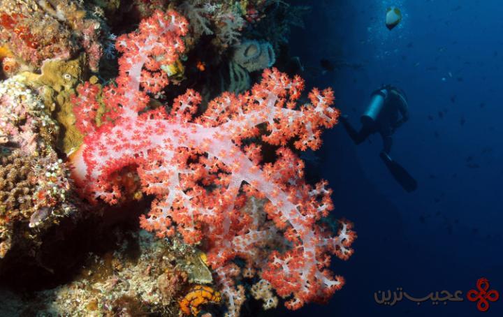 جزیره بوناکن