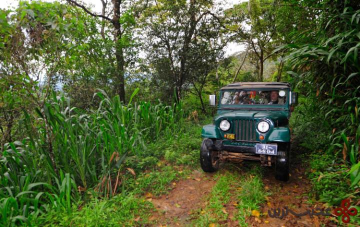 جنگلهای بارانی سینهاراجا