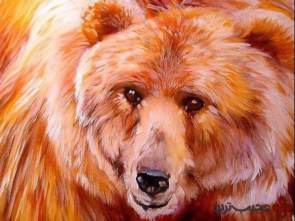 خرس طلایی کالیفرنیا (california golden bear)