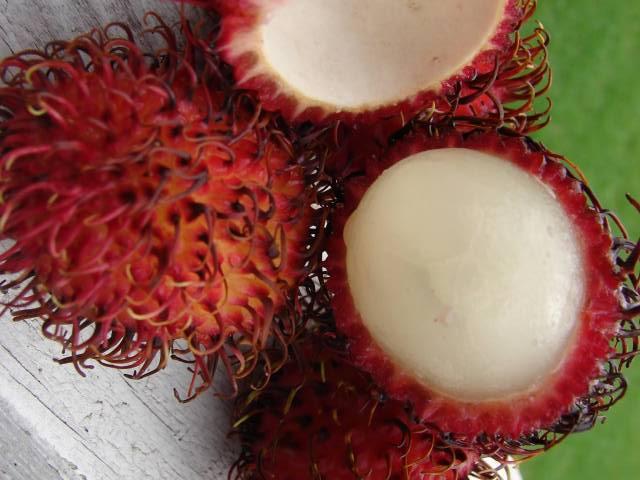 کاور ۱۲ میوه عجیب که انگار از سیاره دیگری آمدهاند!