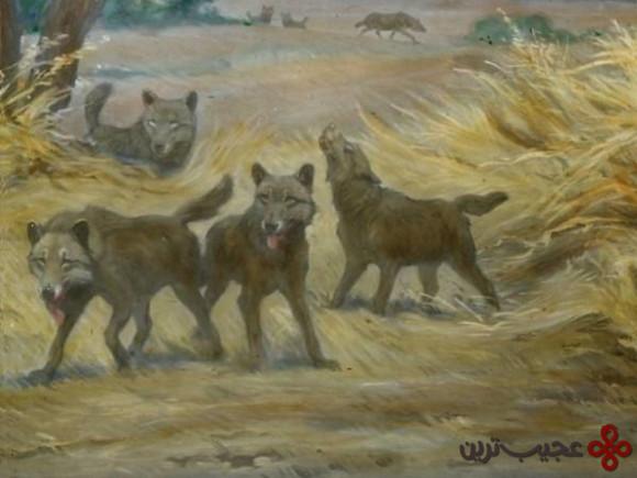 گرگ وحشت (dire wolf)