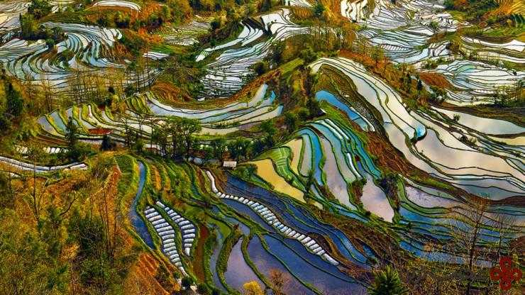 4 مزارع تراسی شکل برنج، یونان (yunnan)، چین3