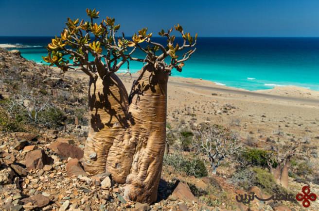 جزیره سقطرا 2