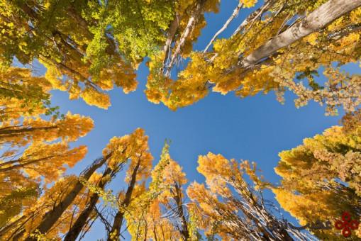 جنگل اتاگو 3