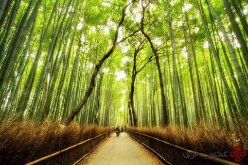 جنگل بامبو 2