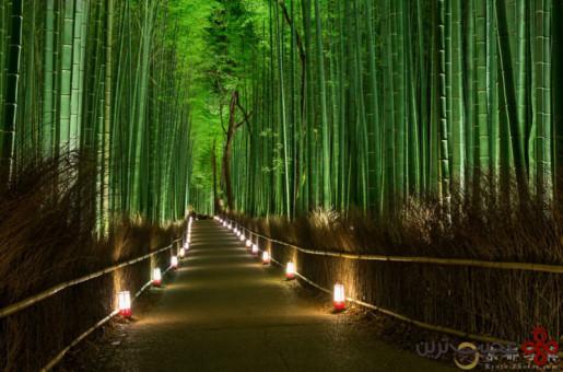 جنگل بامبو 3