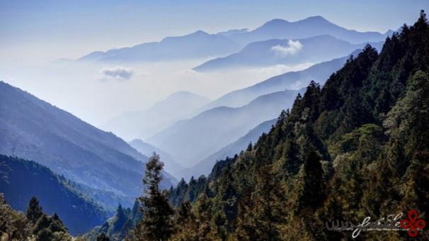 جنگل تایپینگشان 1