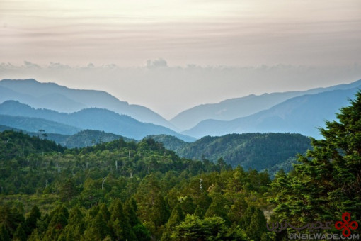 جنگل تایپینگشان 2