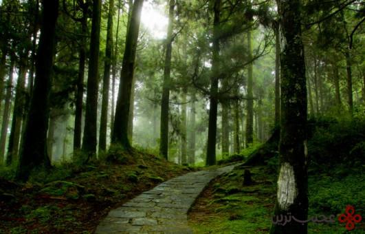 جنگل تایپینگشان 3