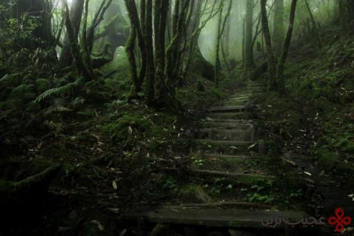 جنگل تایپینگشان 4