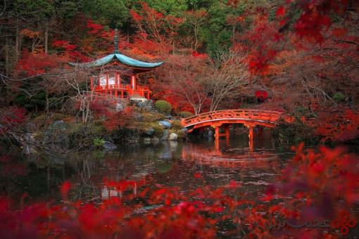 جنگل daigo ji 1