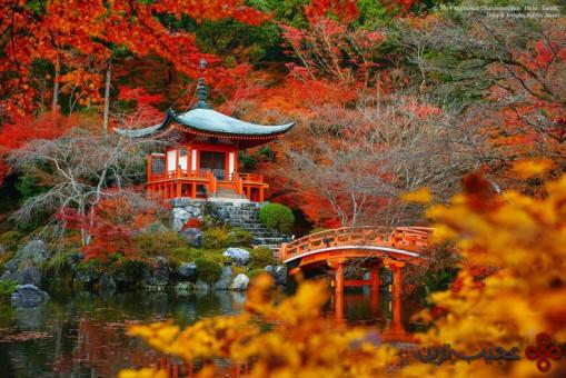 جنگل daigo ji 4