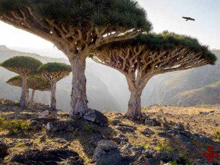 سوکوترا، یمن