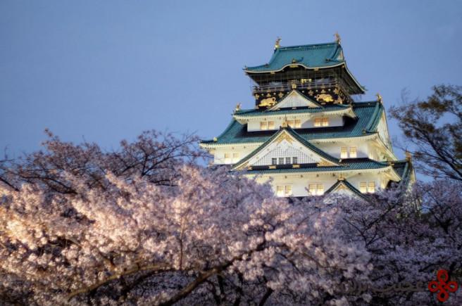 فستیوال شکوفه گیلاس 2