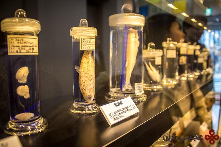 موزه انگل شناسی توکیو