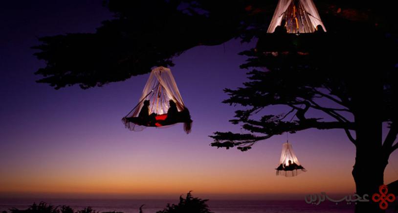 کالیفرنیا؛ کمپ درخت