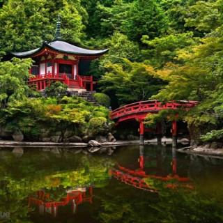 کاور ۱۰ تا از زیباترین جنگلهای جهان!