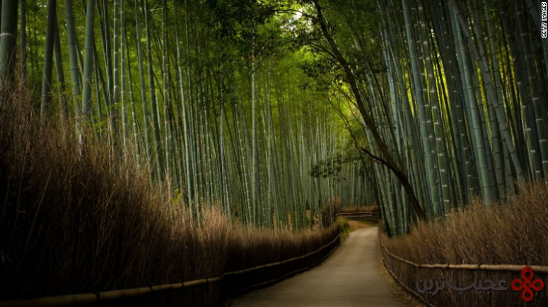 جنگل بامبو، تنریو جی