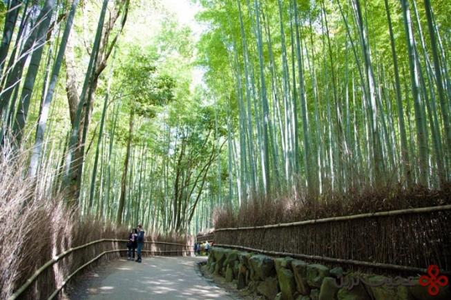 آراشی یاما (arashiyama)، کیوتو، ژاپن