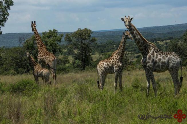 اقامتگاه خصوصی لئوبو (leobo)، واتربرگ، آفریقای جنوبی3