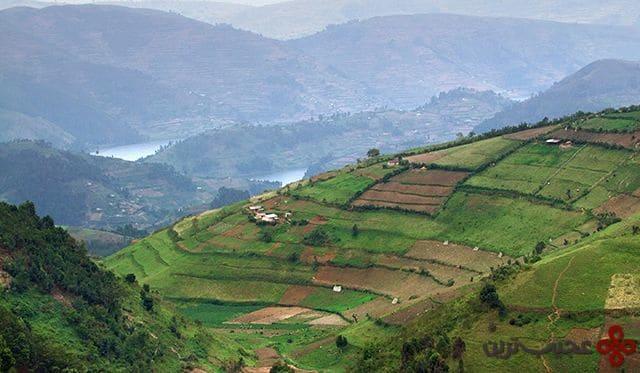 اوگاندا (سالانه ۳۱۴٫۴۸۹ تن)
