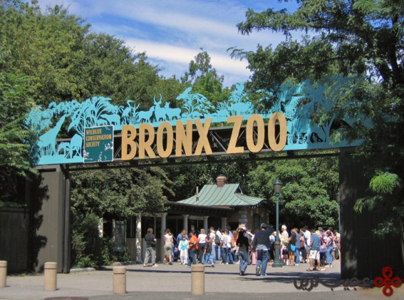 باغوحش برانکس