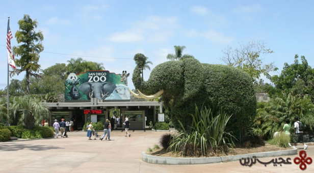 باغوحش سندیگو