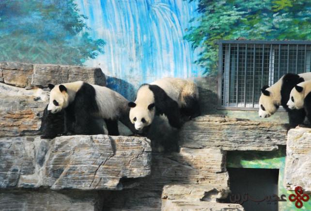 باغوحش پکن