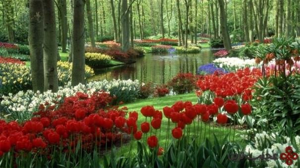 باغ کوکنهف، لیز، هلند