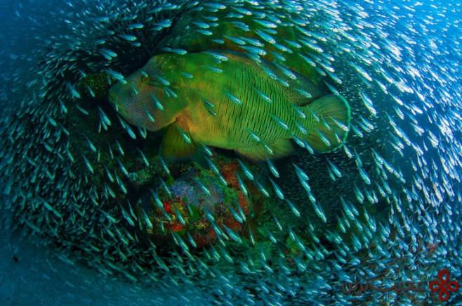 جزایر بزرگ مرجانی، استرالیا ۱