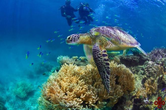 جزایر بزرگ مرجانی، استرالیا ۲