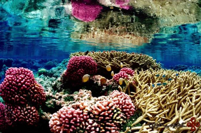 جزایر بزرگ مرجانی، استرالیا ۳