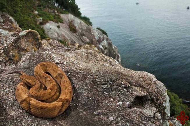 جزیره مارها (snake island)، برزیل