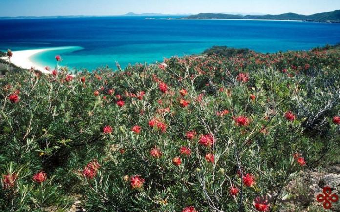 جزیره great barrier reef